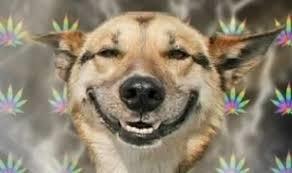 medical marijuana for dog