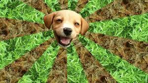 dog cannabis