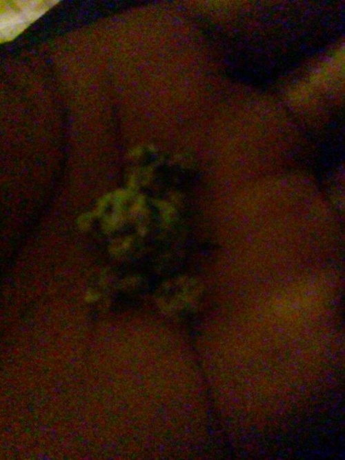 marijuana in kentucky