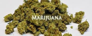 States Preparing For New Marijuana Reform