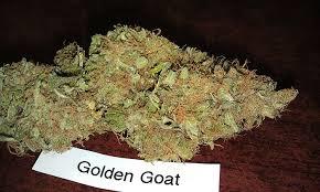 top strains of weed